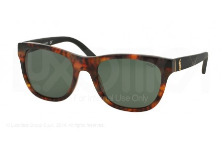 Polo  0PH4091 550371 VINTAGE JERRY TORTOISE